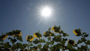 Sunshine, alluding to the benefits of Vitamin D