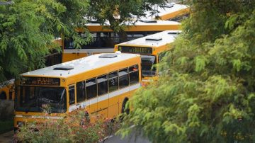 Horarias buses, whose drivers have been included in vaccination plan