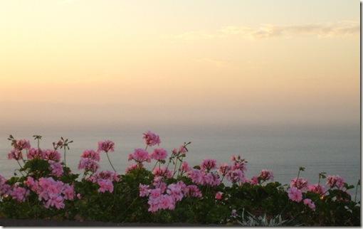 madeira news blog 0905 jon sea flowers sunset composition