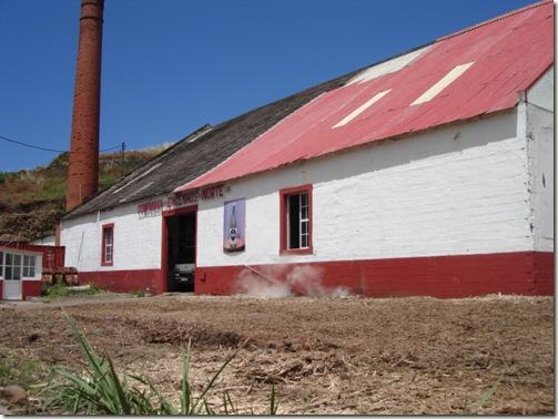 madeira news blog 0906 jaquine sugar cane plant 1