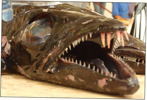 madeira news blog 0908 jim fish market