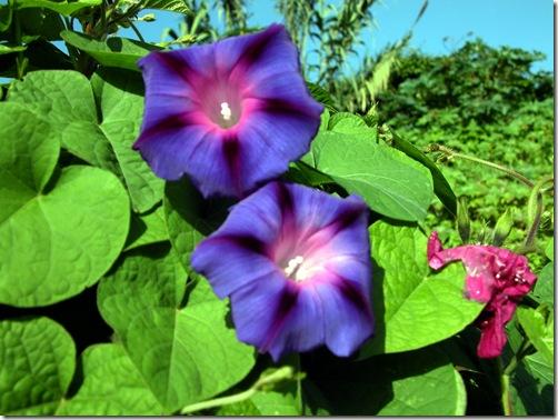 madeira news blog 1002 pete carnival time flower good morning Madeira