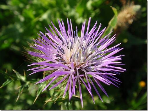 madeira news blog 1003 tobi spring flower