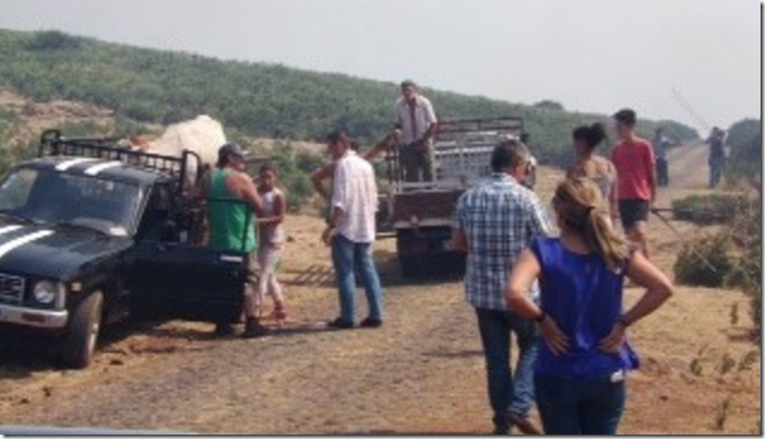 Livestock being rescued