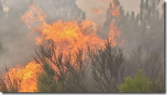 Fires in Madeira