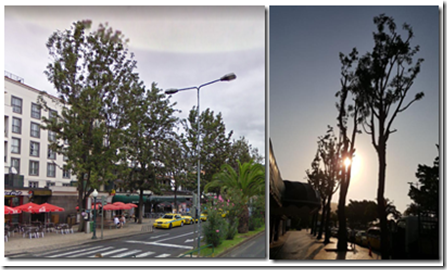 Avenida do Mar trees before and after